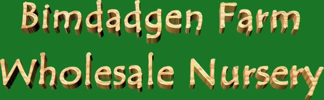 Bimdadgen Farm Wholesale Nursery