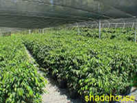 Photo of Bimdadgen Shadehouse